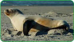 Marine-mammals-Encyclopaedia