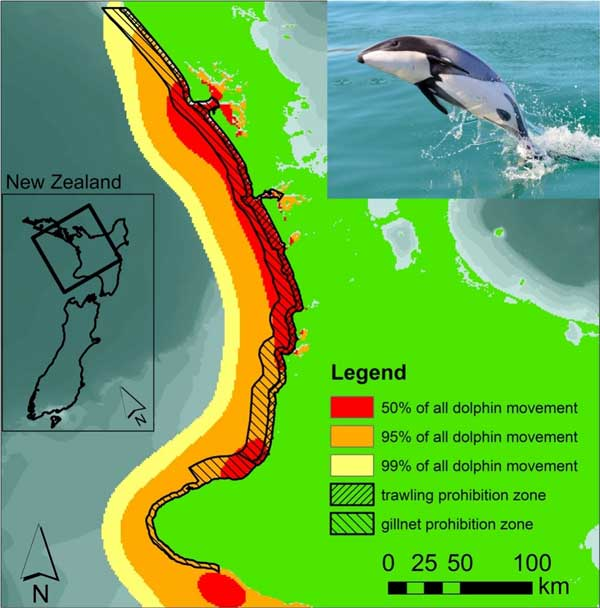 Probability distribution of the occurrence of Māui's dolphins along the west coast of New Zealand's North Island according to a simulated distribution model (coloured areas) in correlation to trawling and gillnet prohibition zones (dashed areas). Source: de Jager et al. (2019).